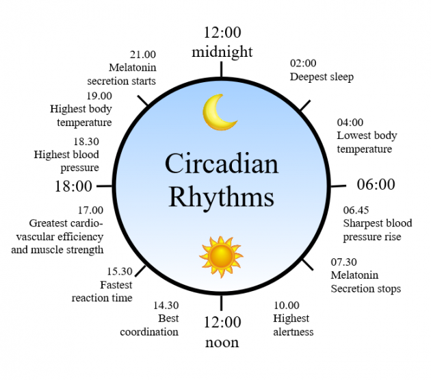 3 Ways to Maximize Your Circadian Rhythm